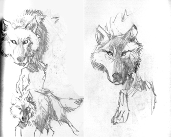 The_missing_wolves